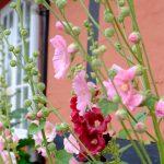 Bornholm: Sommerhus og badeferie