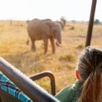 Safari i Afrika: Sådan bliver du klar